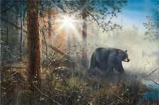 "John McFaul /""Bear Dip/"" Bear taking a Swim Art Print 16/"" x 24/"""