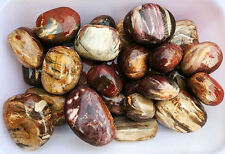 1 Kg Natural Polished Petrified Wood Fossil Agate Gem Stone From Madagascar