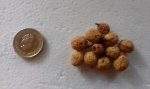 Chinaberry Tree, Melia azedarach, Pride Of India, Bead Tree x 25 Seeds.