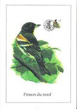 FDC 2921 - Oiseau Buzin sur gravure format A4 !