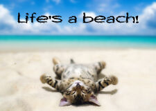 METAL MAGNET Kitten Laying On Back Life's A Beach Humor Cat MAGNET