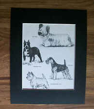 Terrier Dog Print Gladys Emerson Cook Skye Staff Welsh Whigh Bookplate 1962 wMat