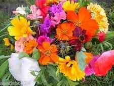 RomantikGarten Mischung Samen Saatgut Saat ProfiqualitätBlumenmischung Blumenmix