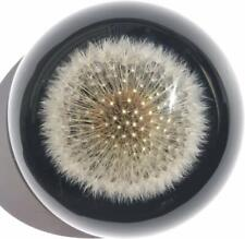 Dandelion Paperweight Dome - A Real Dandelion Puff