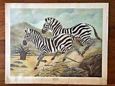 John A Ruthven Safari Series Grant's Zebra Color Lithograph (DISCOLERED BORDER)