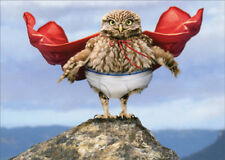 Owl Superhero with Cape Avanti Humorous Funny Birthday Card