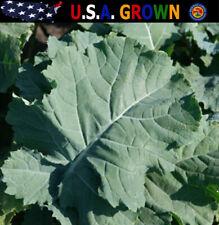 Premier Kale Seeds Non-Gmo Heirloom Gardening (500 Seeds)