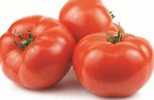 BEEFSTEAK TOMATO SEEDS VEGETABLE GARDEN HEIRLOOM SEEDS 50 SEED PACK