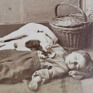 Balmy Sleep Boy Dog Sleeping Ground Basket Dreaming Dreams Photo Stereoview R61