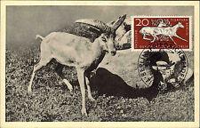 Berlin Tierpark Zoo Wildschafe 1956 DDR Postkarte passende Frankatur Briefmarke
