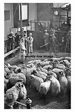 pt6093 - Skipton Sheep Market 11 October 1944 , Yorkshire - photo 6x4