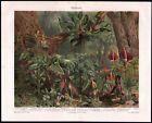 Arazeen Tropical Forest Plant Life 1909 Chromolithograph Meyers Antique Print