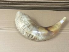 "Jewish Shofar 10-12"" Ram Horn Blowing Synagogue Prayer Free Shipping From Israel"