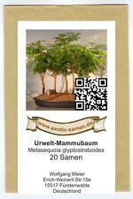 Bonsai - Urwelt-Mammutbaum (20 Samen)