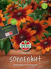 Sperli - Cogotera Capuchino Rudbeckia variedad ganadora - 86922