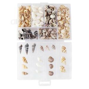 100x Small Mini Conch Shells Bulk Natural Beach Sea Jewellery Craft DIY AU