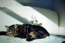 Vintage Agfacolors Slide Negative, Cat with Rabbit Teddy Resting on a Bed