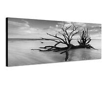 150x50cm Panoramabild Schwarz Weiss - abgestorbener Baum Küste Sandstrand Meer