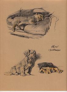 c. aldin original 1935 print of a chow & pekinese