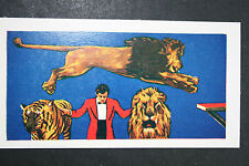 Big Cats Circus Act      Large Illustrated Card  # EXC