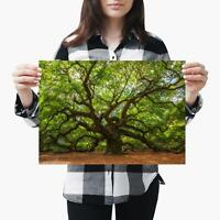 A1 Old Tree Forest Nature Oak Poster 60X90cm180gsm Print #2868