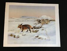 Vintage Fox And Rabbit Colour Print Ready For Mounting