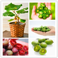 100 PCS Seeds Kiwi Fruit Bonsai Mini Berry Delicious Vegetable Home Garden NEW H