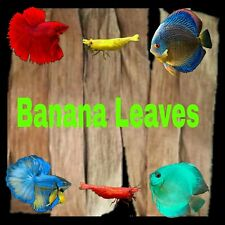 200pcs 100% Organic Banana Leaves for Tropical Fish Breeding Water Conditioner