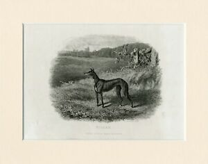 RARE OLD ANTIQUE 1860 DOG PRINT ENGRAVING OF DEERHOUND DOGS READY MOUNTED