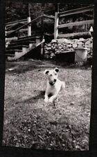 Vintage Photograph 1927-1930'S Pennsylvania Fox Terrier Dog Puppy Pup Old Photo