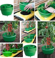 GARDEN PLANT HALO HALOS TOMATOES TOMATO PLANTER BEAN GROW BAG WATERING POT TUB