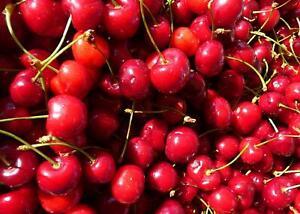 1X 3-4FT DWARF PRUNUS STELLA CHERRY FRUIT TREE - MINI FRUIT TREE - 5L