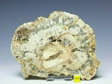 More details for petrified fossilised wood section slice slab prehistoric palm tree 518g