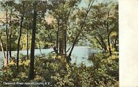 Auburn NY Early Autumn View: Thru Trees to the Owasco River~1906 (UDB) Postcard