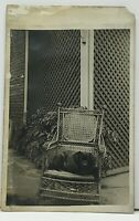 RPPC Dog in a Beautiful Wicker Cane Back Bamboo Rocking Chair c1907 Postcard G15