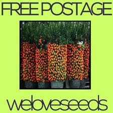 LOCAL AUSSIE STOCK - Climbing Orange Tree, Fruit Seeds ~20x FREE SHIPPING
