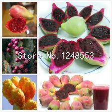 100pcs Prickly pear cactus- edible pads, fruit seeds flower,Opuntia Leptocarpa