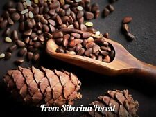 Wholesale Siberian Cedar Pine Nuts - Natural Organic Fresh Harvest 2020