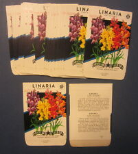 Wholesale Lot of 25 Old Vintage Linaria Fairy Bouquet Flower Seed Packets -Empty