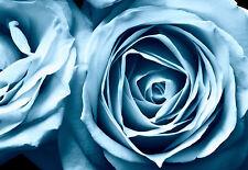 Incorniciato stampa-BELLISSIMO Alzavola / Blu Rose (PICTURE POSTER Floreale Art)