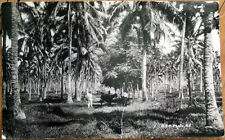 1920 Samoa, Polynesia Realphoto Postcard: Men with Cow and Palm Trees