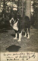 Collie Dog Mix - Ossipee Written on Front CRISP Real Photo Postcard c1910