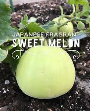 RARE✿ Delicious! Japanese Fragrant Sweet Melon 15 Seeds ●Crisp ●Excellent Flavor