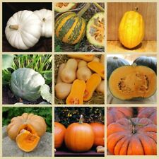 10PCs Pumpkin Vegetable Seeds 10 Kinds Garden Organic Delicious Useful Halloween