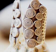 Silberring 2,7 cm Handarbeit Spirale Ring Silber Offen 54 - 59 Dick Massiv Lang