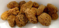 20 LARGE pieces Brown Natural Sea sponges for Artists Crafts Painting Pottery