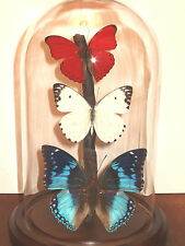 Red, White & Blue Butterfly Dome