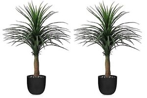 Pair of 4ft,120cm Artifcial Potted Yucca Tree Indoor or Outdoor Decorative Plant