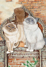 Birman Cat Blank Note Cards Boxed