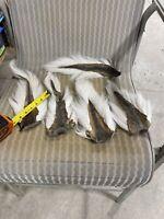 5 Deer Tails. Clean.